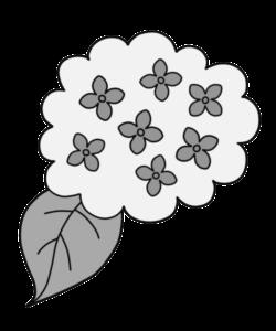 紫陽花 白黒 フリー素材