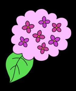 紫陽花 フリー素材 ピンク