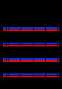2020年12月 家族カレンダー 4人 シンプル 背景透過