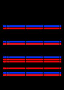 2021年家族カレンダー シンプル 背景透過PNG形式 3人用 9月