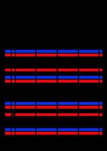 2021年家族カレンダー シンプル 背景透過PNG形式 4人用 2月