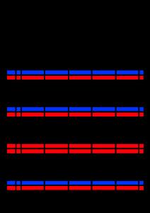 2021年家族カレンダー シンプル 背景透過PNG形式 5人用 3月
