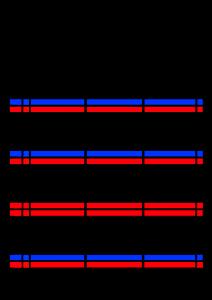 2021年家族カレンダー シンプル 背景透過PNG形式 3人用 3月