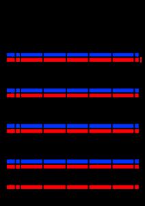 2021年家族カレンダー シンプル 背景透過PNG形式 5人用 4月