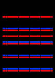 2021年家族カレンダー シンプル 背景透過PNG形式 4人用 8月
