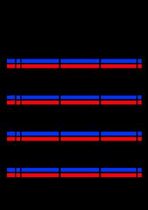 2021年家族カレンダー シンプル 背景透過PNG形式 3人用 12月