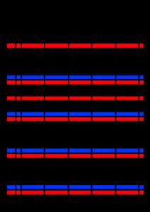 2021年家族カレンダー シンプル 背景透過PNG形式 5人用 8月
