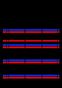 2022年(令和4年)家族カレンダー シンプル 背景透過PNG形式 無料 3人 8月
