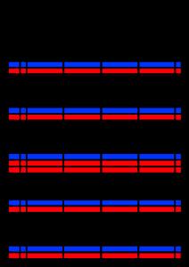 2022年(令和4年)家族カレンダー シンプル 背景透過PNG形式 無料 4人 7月