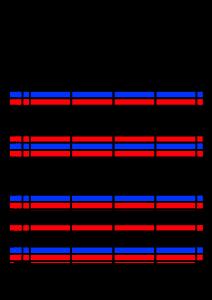 2022年(令和4年)家族カレンダー シンプル 背景透過PNG形式 無料 4人 2月