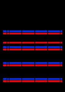 2022年(令和4年)家族カレンダー シンプル 背景透過PNG形式 無料 4人 8月