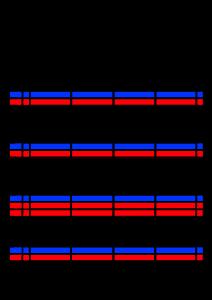 2022年(令和4年)家族カレンダー シンプル 背景透過PNG形式 無料 4人 3月