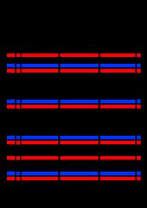 2022年(令和4年)家族カレンダー シンプル 背景透過PNG形式 無料 3人 11月