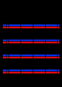 2022年(令和4年)家族カレンダー シンプル 背景透過PNG形式 無料 4人 6月